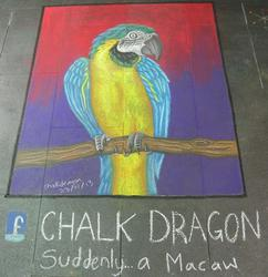 Chalk art - Macaw