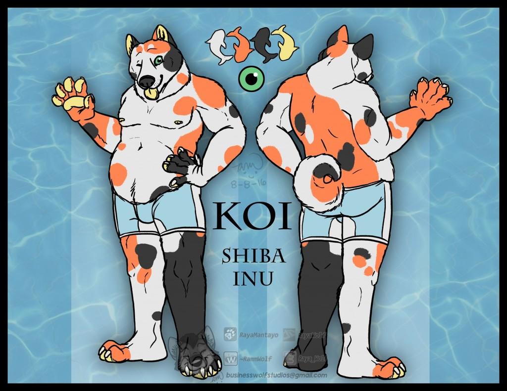 Koi Shiba Reference