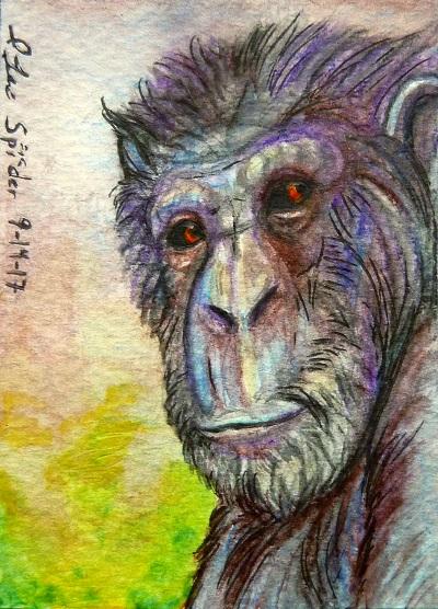 ACEO--Chimpanzee Portrait