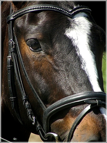 That equestrian look of yours...