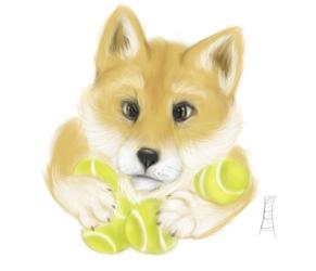 Shiba Inu Puppy Study