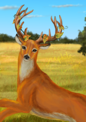 Deer and Catbrier