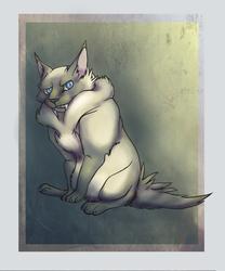 Fat Cat Pipi