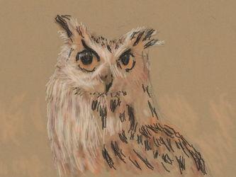 Art Academy - Owl