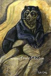 Endangered Ark - Spectacled Bear