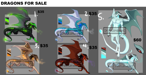 Dragon adopts for sale