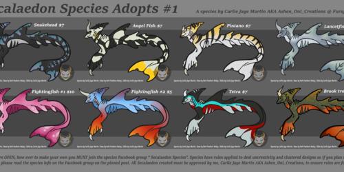 Adopts - Secalaedon Batch #1