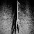 destruction of the mind (quantum suicide)
