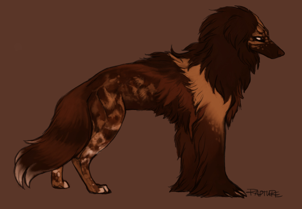 Most recent image: Silky Beardog #34
