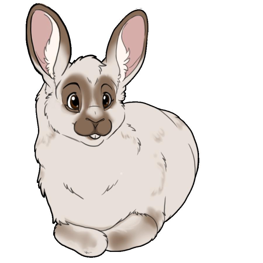 Ami-Bunny