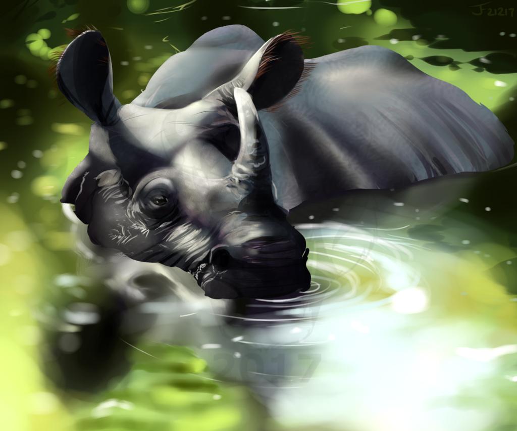 Rhino Study