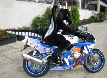 New Dragon Rider