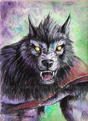 Wolf Pastel Sketch - 2012