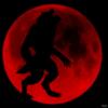 avatar of trwerewolf