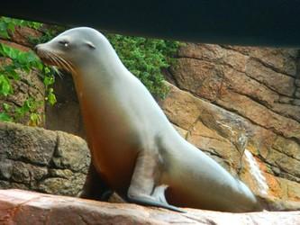 Do seals dream of schools of fish?