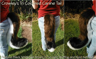 [C] Crowley's TriColoured Canine Tail