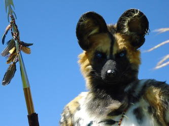 Up Close With a Wild Dog