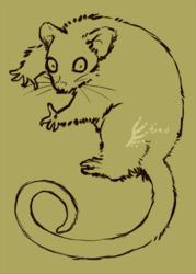 possum lines