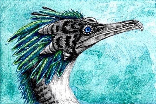 Cormorant Skydancer