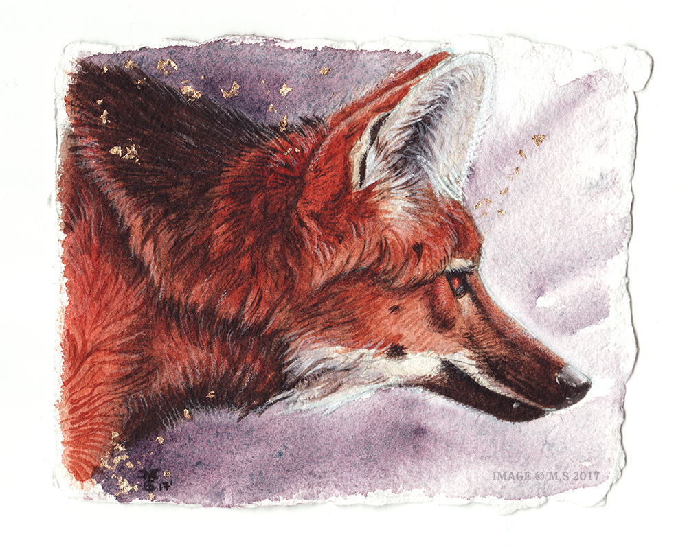 The Maned Wolf