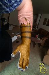 Shedding Tiger Paw