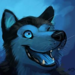 Azul Husky