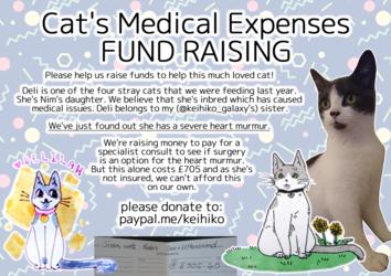 HELP FUND RAISE! Deli cat needs specialist consult