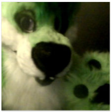FIRST PIC IN FURSUIT!!!!!!!