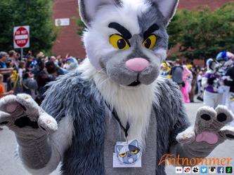 Parade Cat