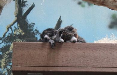 Lazy Monkeys