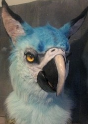 spix macaw gryphon commission