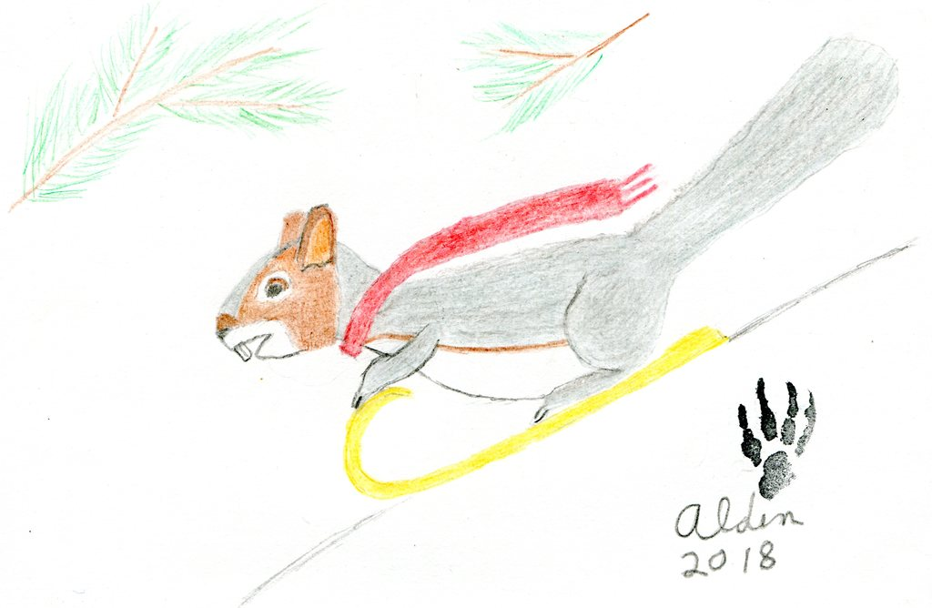 Most recent image: Aldin sledding