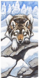 Dawn bookmark: Winter