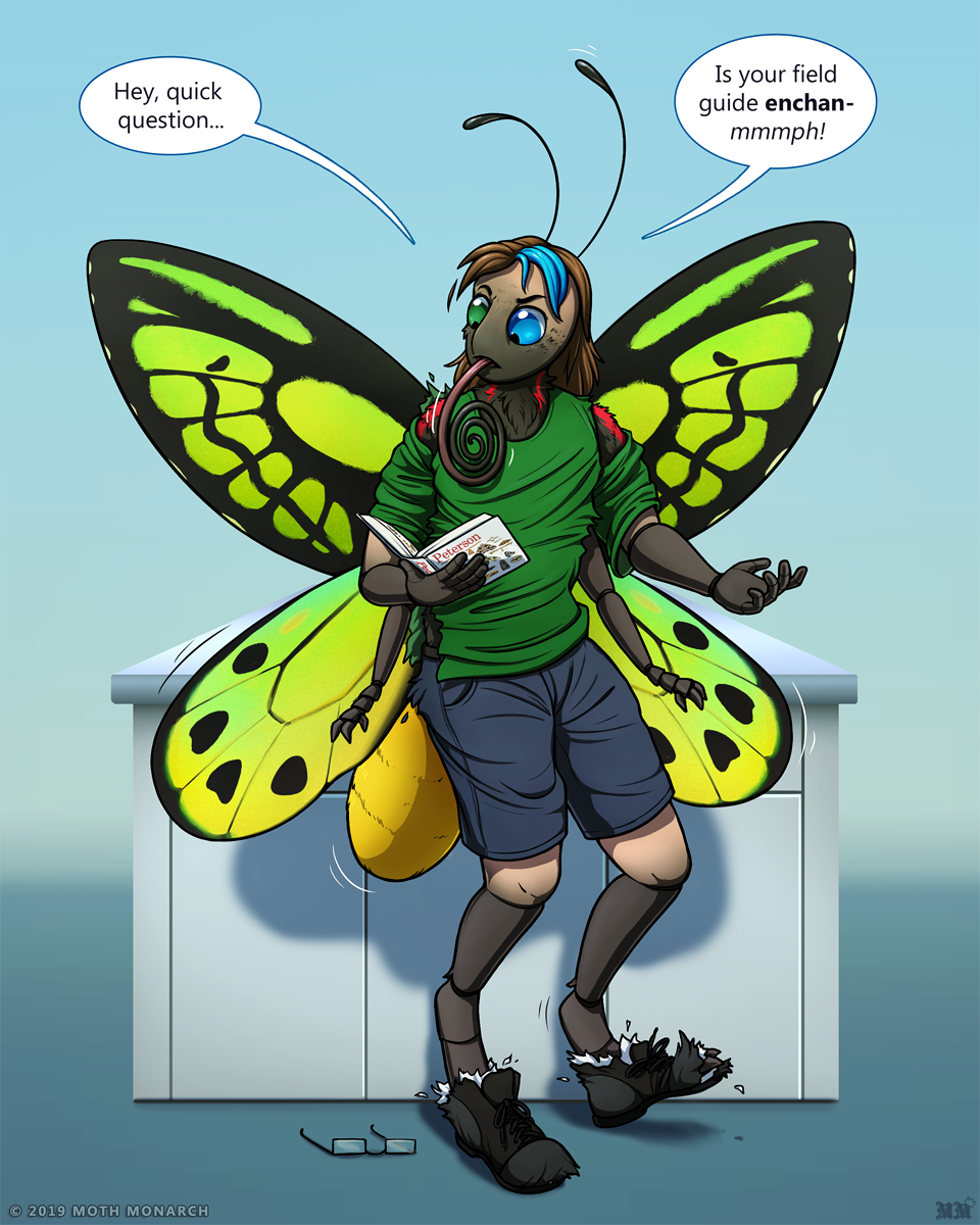 Field Guide Metamorphosis