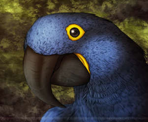 The Hyacinth Macaw Project