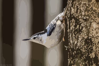 White Breasted Nuthatch - Vector
