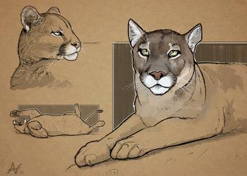 Cougar Sketches