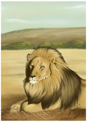 Lion on a warm hard ground