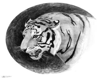 Mongolian Tiger