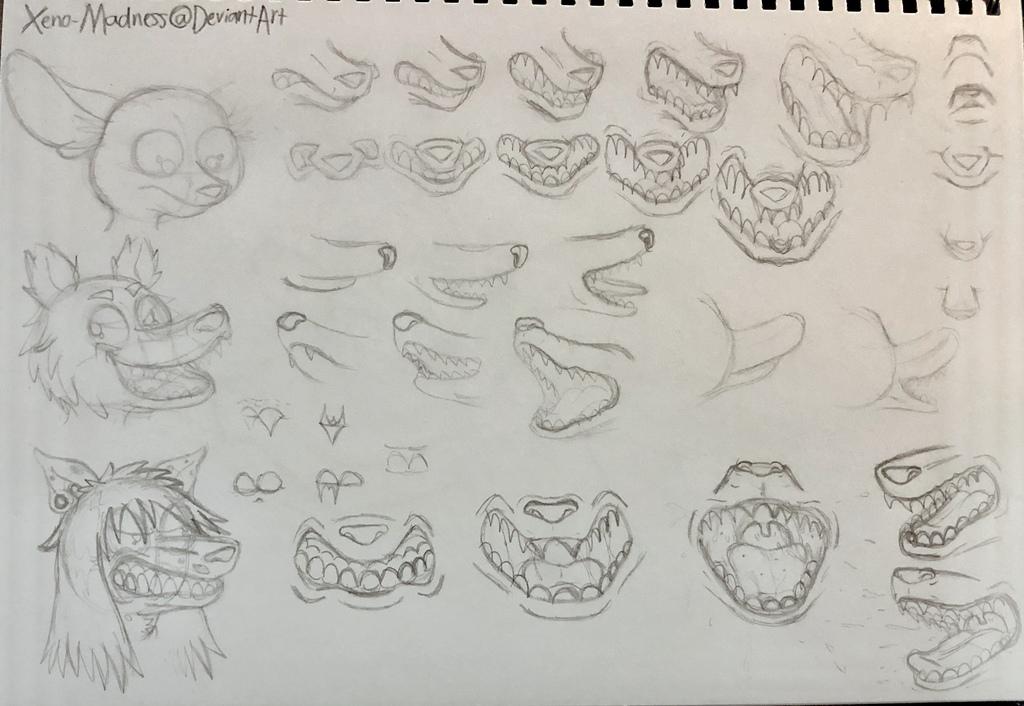 Jaw Anatomy Sketches