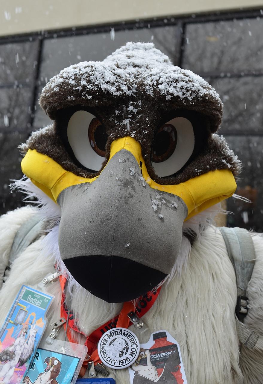 Snowy Hawk