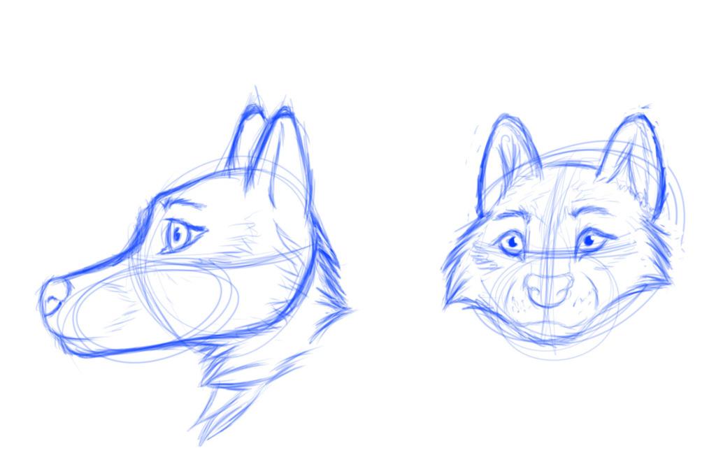 wolf head sketches