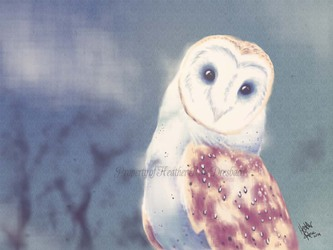 Personal: Inquisitive Barn Owl
