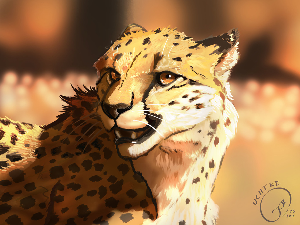 Most recent image: Another cheetah