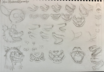 Jaw Anatomy Sketches
