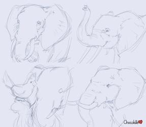 Elephants practice