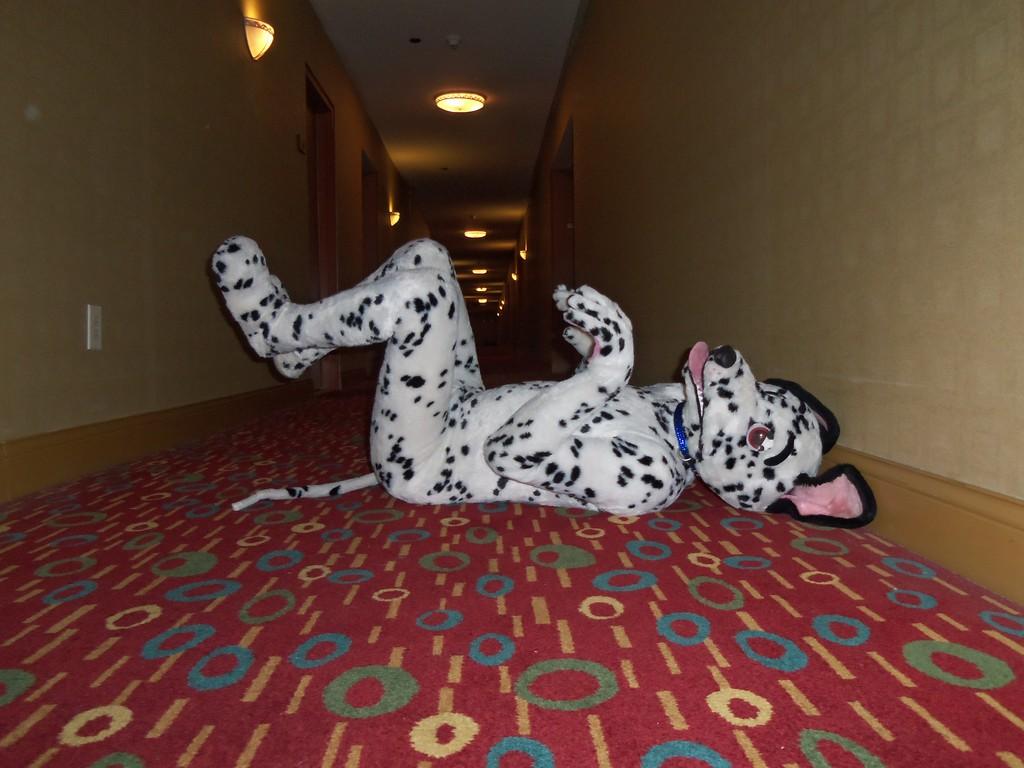 Dalmatian looking cute.