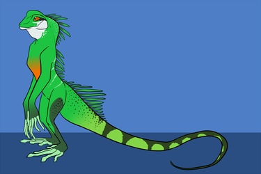 Jace the Chinese Water Dragon