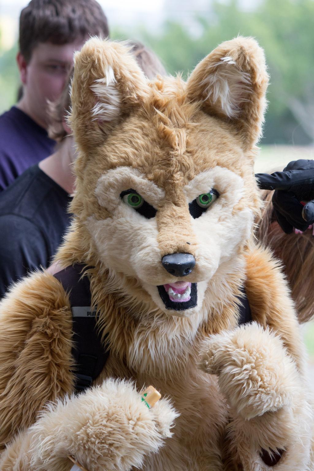 DecemFUR: Dangerous Dingo
