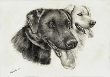 [COMM] Dogs portrait